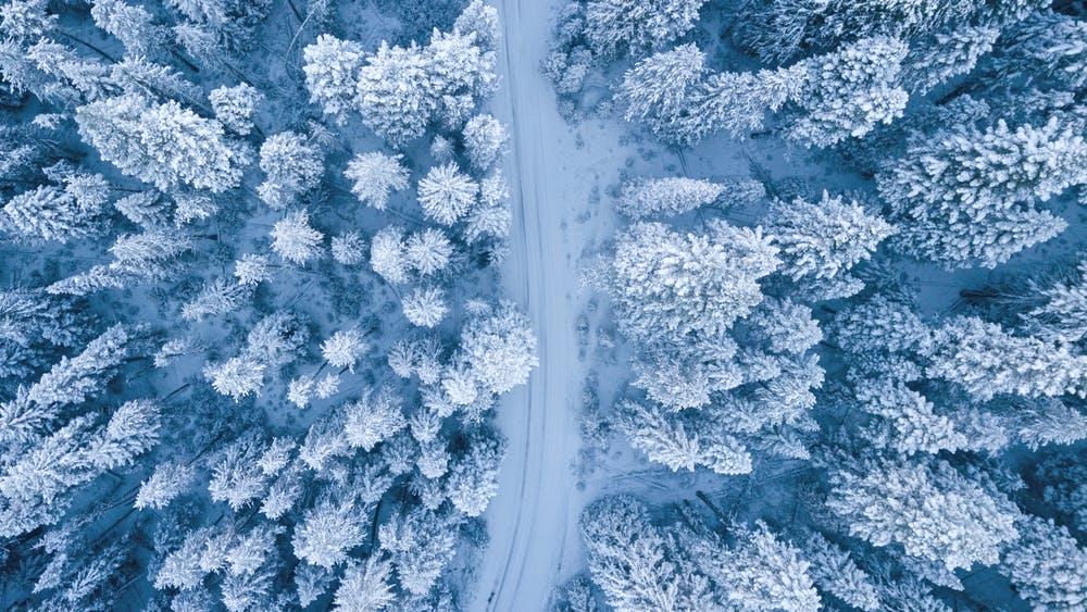 Wald, Vogelperspektive, Schnee, Winter