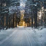 Wald, Schnee, Weg, Winter