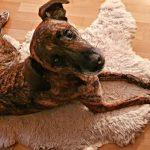 Tiergestützte Therapie / Ergotherapie mit Maja unserer Therapiebegleithündin